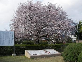 史跡長岡宮跡No3.JPG